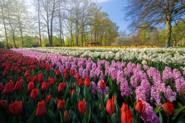 Mãn nhãn với vườn hoa đẹp nhất thế giới - 8