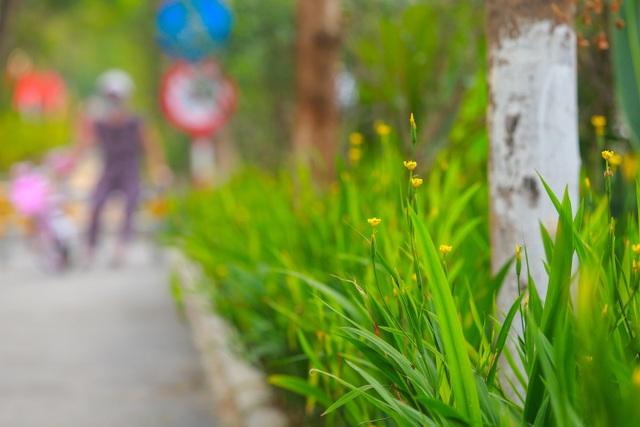 Người Hà Nội thích thú với đường đi bộ rợp cây xanh lãng mạn như phim Hàn - 3