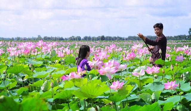 Thủ tướng nói về khả năng sen trở thành Quốc hoa của Việt Nam - 1