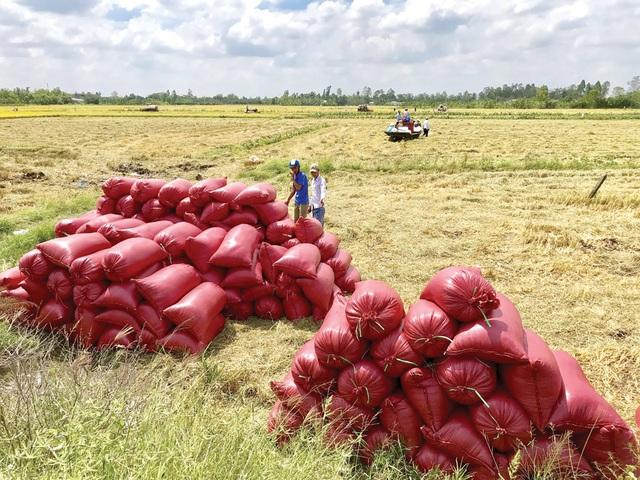 Trung Quốc hối hả mua gạo của Việt Nam, giá gạo xuất khẩu tăng vọt - 1
