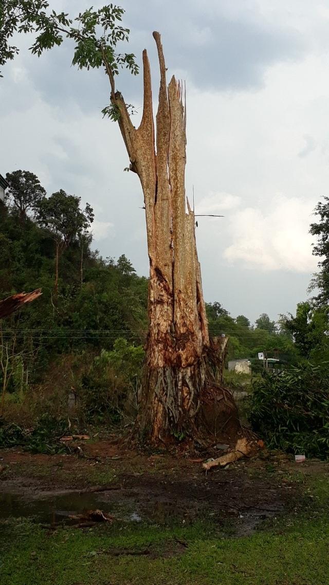 Cận cảnh trận lốc xoáy càn quét bản làng xứ Nghệ - 7