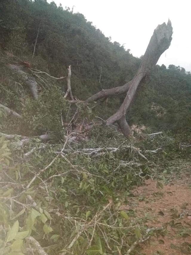 Cận cảnh trận lốc xoáy càn quét bản làng xứ Nghệ - 2