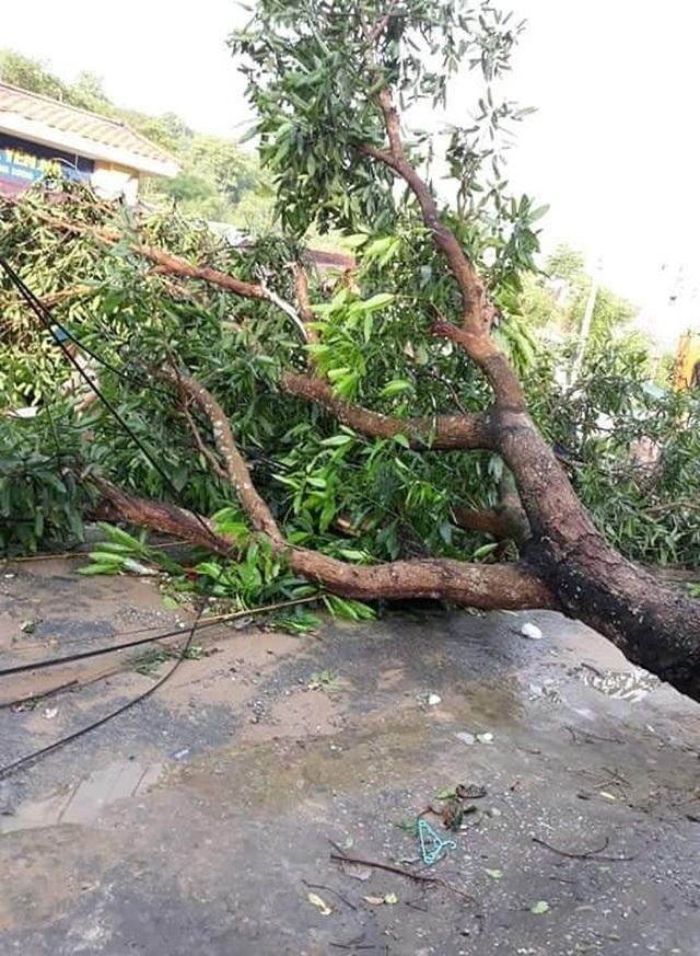Cận cảnh trận lốc xoáy càn quét bản làng xứ Nghệ - 6