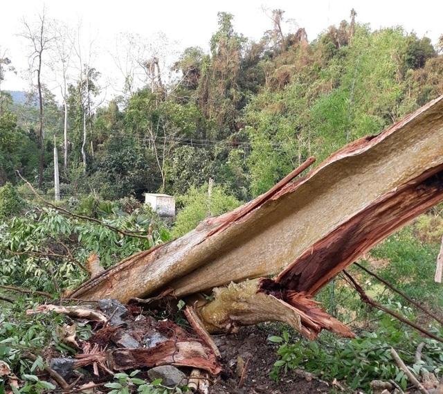 Cận cảnh trận lốc xoáy càn quét bản làng xứ Nghệ - 8
