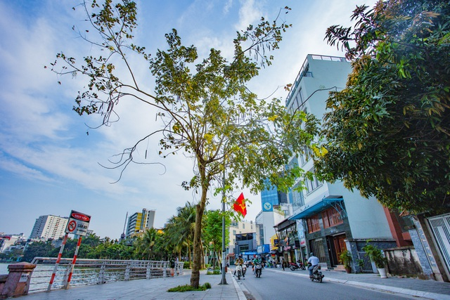 Con đường nhuộm kín sắc hoa muồng hoàng yến, đẹp nên thơ ở Hà Nội - 8