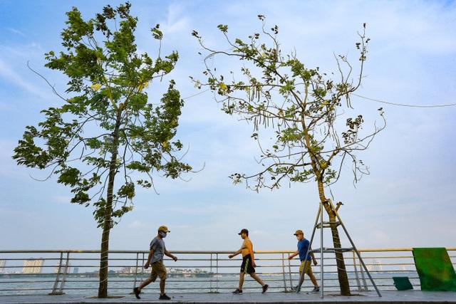 Con đường nhuộm kín sắc hoa muồng hoàng yến, đẹp nên thơ ở Hà Nội - 10