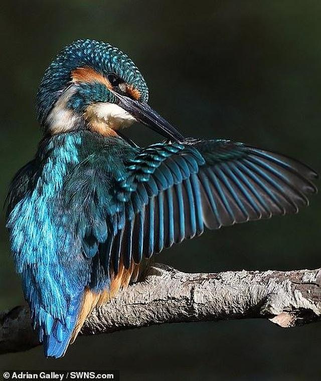 Mãn nhãn với những bức ảnh đẹp nhất về thiên nhiên hoang dã - 6