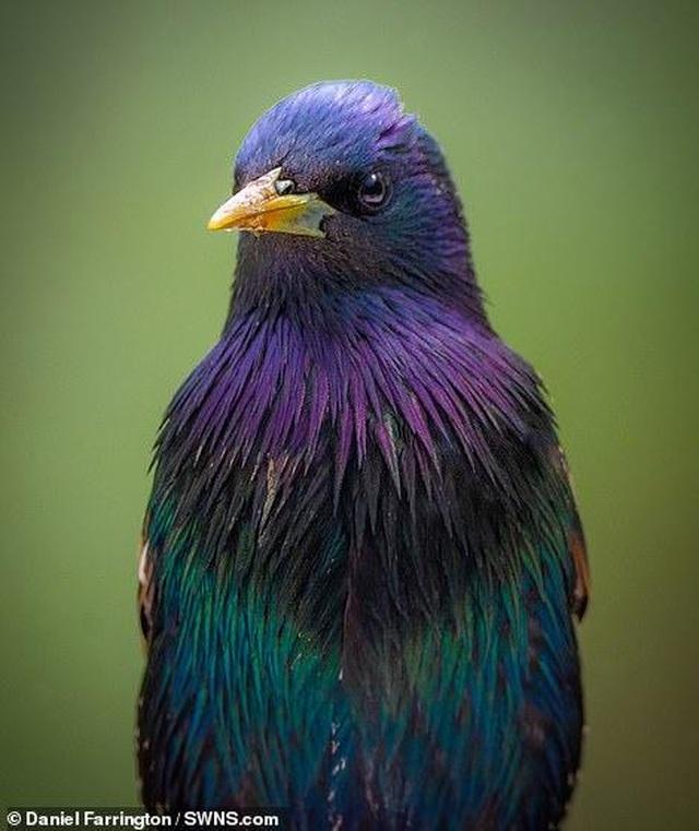 Mãn nhãn với những bức ảnh đẹp nhất về thiên nhiên hoang dã - 7