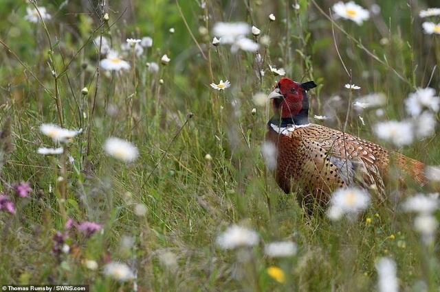 Mãn nhãn với những bức ảnh đẹp nhất về thiên nhiên hoang dã - 9