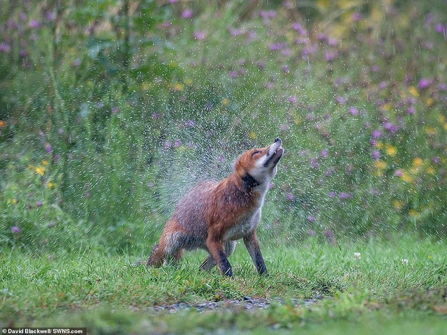Mãn nhãn với những bức ảnh đẹp nhất về thiên nhiên hoang dã - 10
