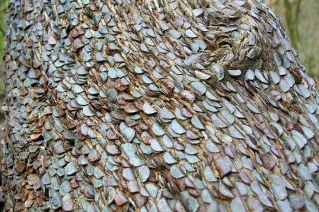 Thân cây được nhét kín tiền, người dân quan niệm ai lấy cắp sẽ mắc bệnh - 1