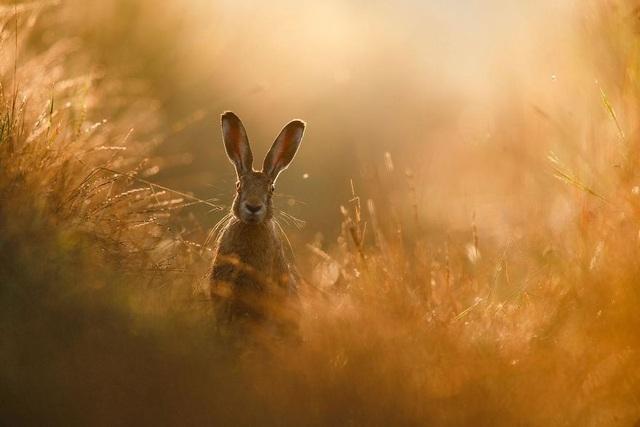 Chiêm ngưỡng tuyệt tác thiên nhiên hoang dã tại cuộc thi ảnh quốc tế - 1
