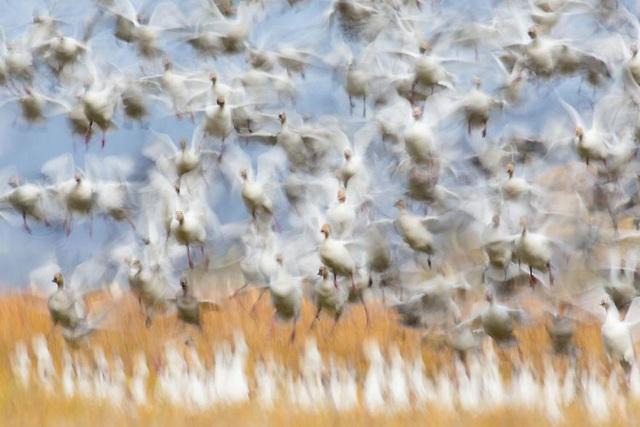 Chiêm ngưỡng tuyệt tác thiên nhiên hoang dã tại cuộc thi ảnh quốc tế - 10
