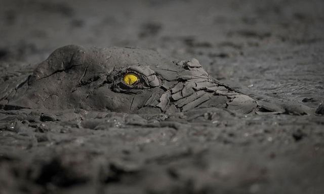Chiêm ngưỡng tuyệt tác thiên nhiên hoang dã tại cuộc thi ảnh quốc tế - 2