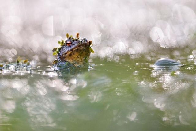 Chiêm ngưỡng tuyệt tác thiên nhiên hoang dã tại cuộc thi ảnh quốc tế - 3