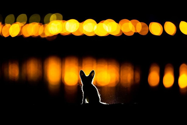 Chiêm ngưỡng tuyệt tác thiên nhiên hoang dã tại cuộc thi ảnh quốc tế - 5