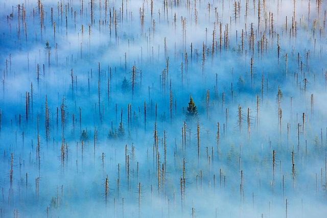 Chiêm ngưỡng tuyệt tác thiên nhiên hoang dã tại cuộc thi ảnh quốc tế - 6