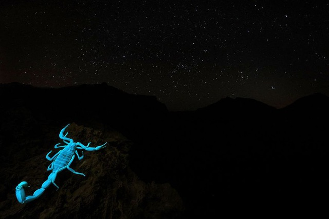 Chiêm ngưỡng tuyệt tác thiên nhiên hoang dã tại cuộc thi ảnh quốc tế - 7