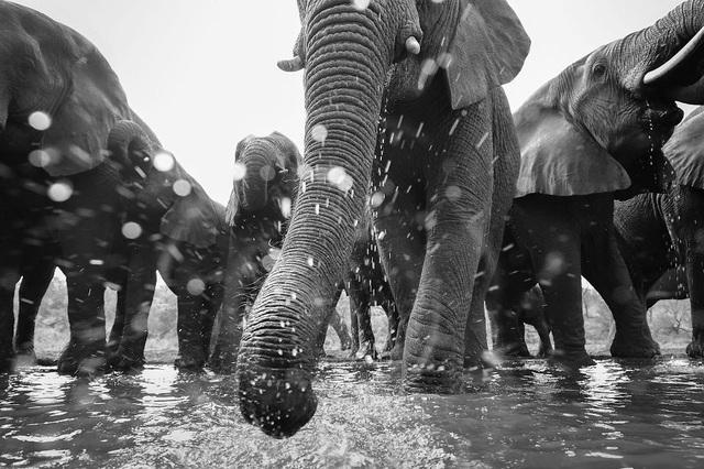 Chiêm ngưỡng tuyệt tác thiên nhiên hoang dã tại cuộc thi ảnh quốc tế - 9