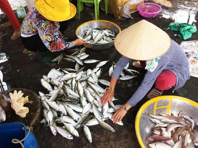 Nhộn nhịp chợ cá Phước Hải - Bà Rịa - 2