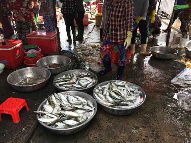 Nhộn nhịp chợ cá Phước Hải - Bà Rịa - 3