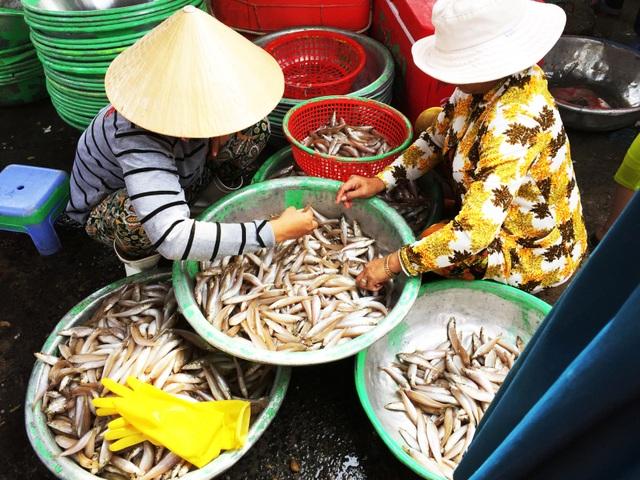 Nhộn nhịp chợ cá Phước Hải - Bà Rịa - 4