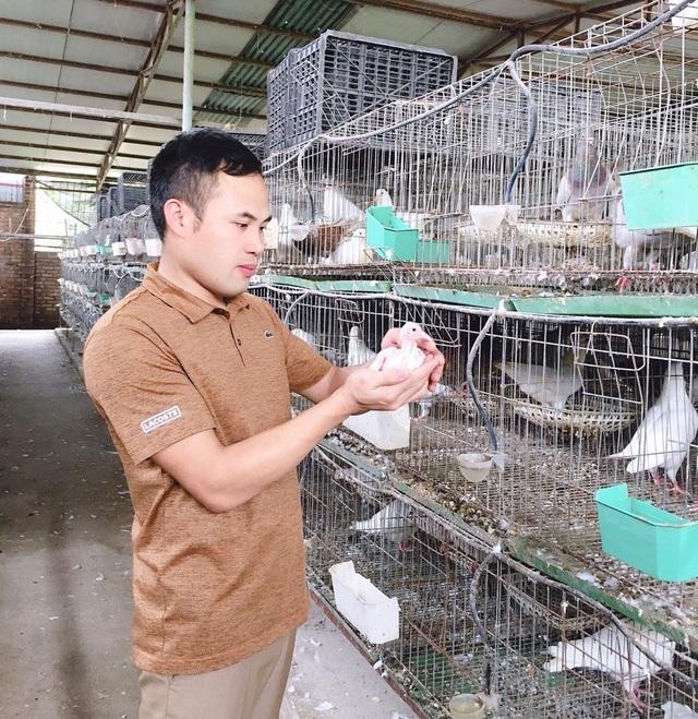 Bỏ nghề lập trình về nuôi chim bồ câu, thu 15 tỷ đồng, lãi 3 tỷ đồng/năm - 4
