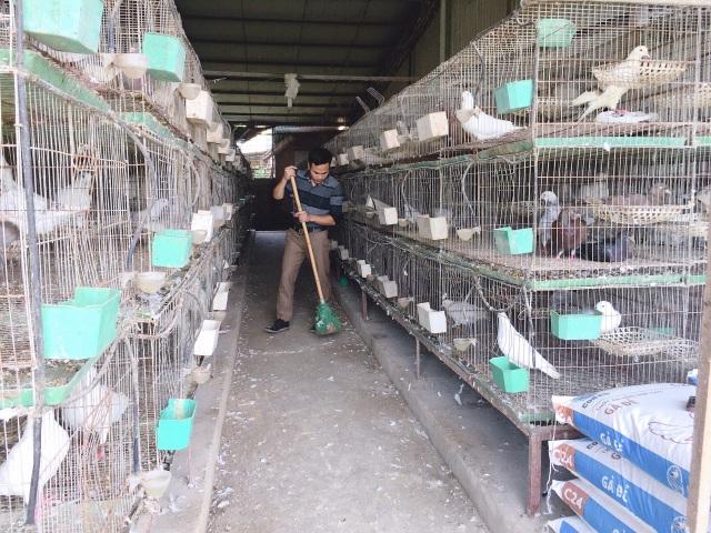 Bỏ nghề lập trình về nuôi chim bồ câu, thu 15 tỷ đồng, lãi 3 tỷ đồng/năm - 5
