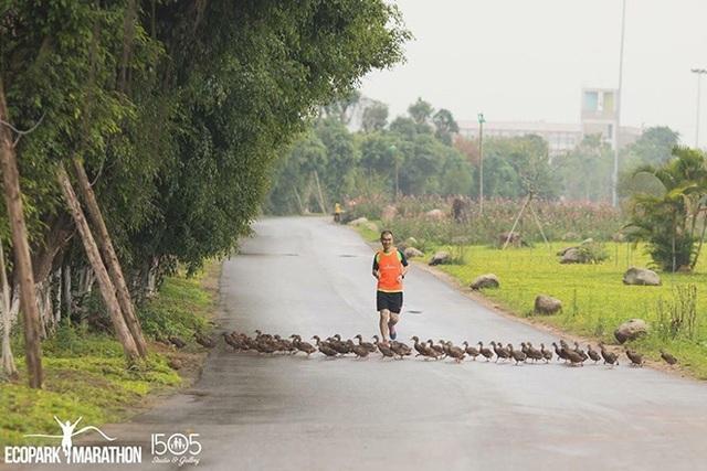 Những đàn thiên nga thân thiện với cư dân trong khu đô thị xanh nhất Hà Nội - 5