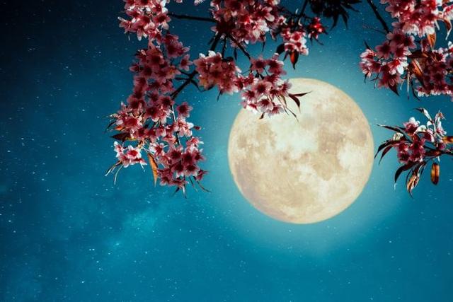 Hơn 3.000 bài thơ tình Phạm Bá Chiểu - Page 23 Sieu-trang-1588770340571