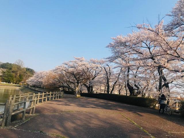 Choáng ngợp cảnh sắc hoa anh đào khoe sắc tuyệt đẹp như cổ tích ở Nhật Bản - 14
