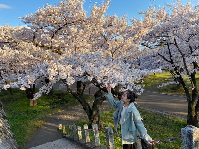 Choáng ngợp cảnh sắc hoa anh đào khoe sắc tuyệt đẹp như cổ tích ở Nhật Bản - 10