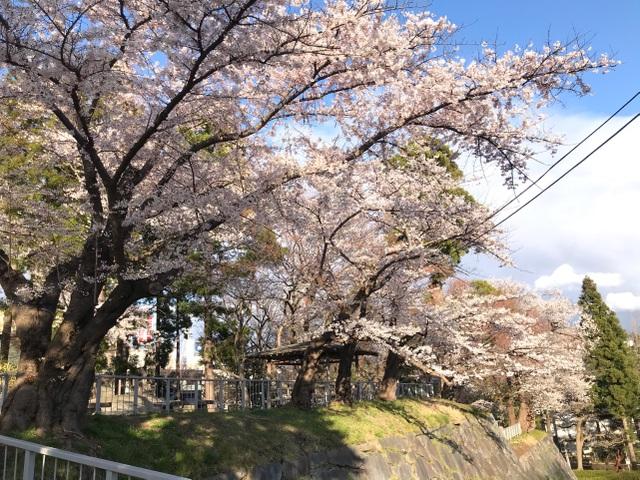 Choáng ngợp cảnh sắc hoa anh đào khoe sắc tuyệt đẹp như cổ tích ở Nhật Bản - 3