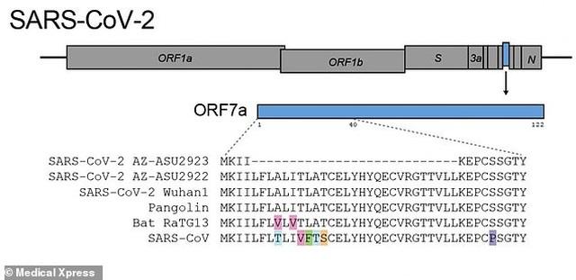 Tìm thấy đột biến mới của virus corona báo hiệu bệnh đang suy yếu - 1