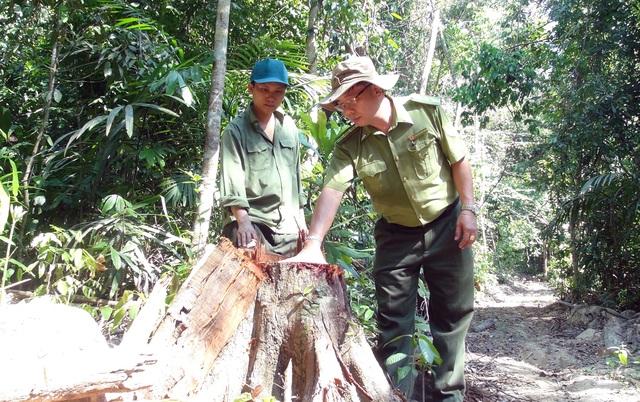 """Vụ """"lâm tặc"""" mở đường phá rừng ở Phú Yên: La liệt gỗ bị bỏ lại hiện trường! - 3"""
