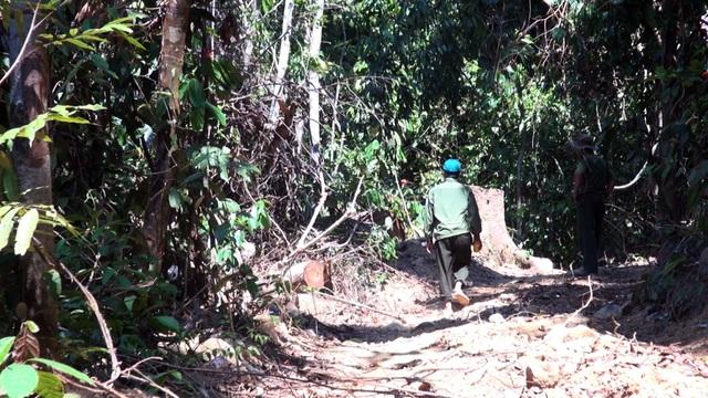 """Vụ """"lâm tặc"""" mở đường phá rừng ở Phú Yên: La liệt gỗ bị bỏ lại hiện trường! - 1"""