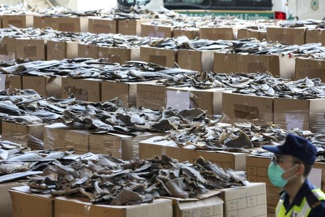 Hồng Kông phanh phui vụ buôn lậu vây cá mập lớn nhất từ trước tới nay - 1