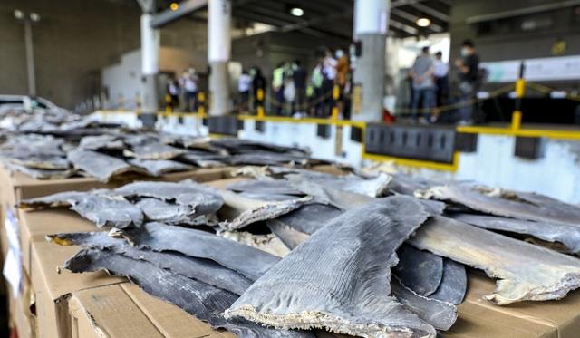 Hồng Kông phanh phui vụ buôn lậu vây cá mập lớn nhất từ trước tới nay - 2