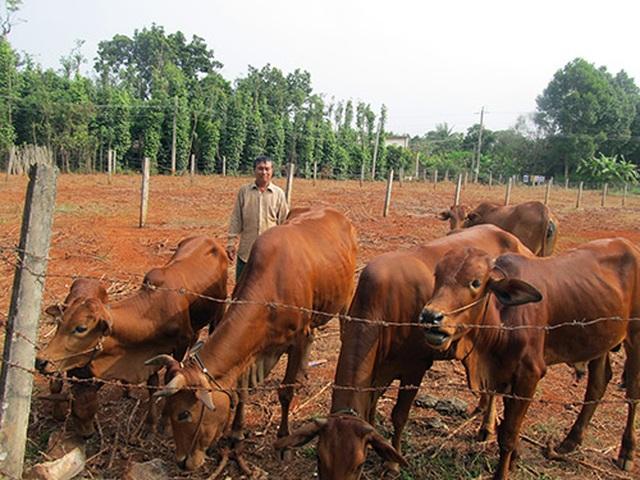 Sau học nghề, nông dân được tiếp vốn ưu đãi để làm giàu - 1