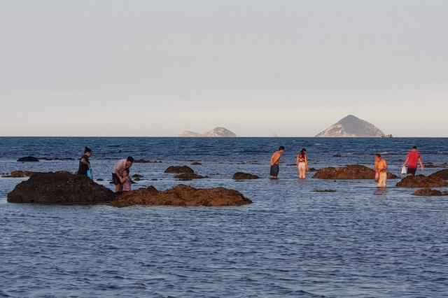 Bãi biển Nha Trang nhộn nhịp mùa nước cạn, phát lộ nhiều bãi đá - 8