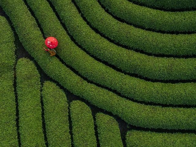 Khoảnh khắc đẹp nhất mùa xuân năm 2020 gọi tên nhiếp ảnh gia Việt Nam - 3