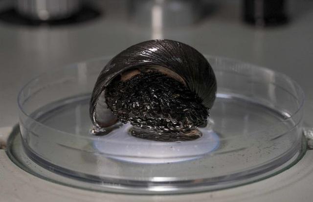 Bí mật của loài ốc sên sống trên miệng núi lửa - 1