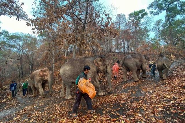 Hàng trăm con voi đi bộ về quê vì thất nghiệp - 1