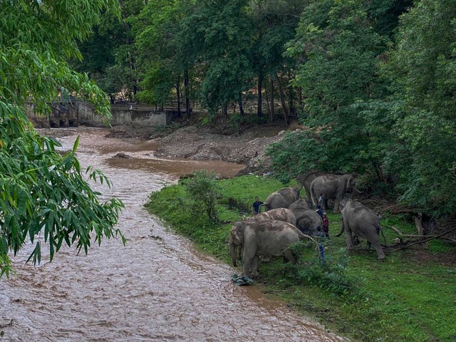 Hàng trăm con voi đi bộ về quê vì thất nghiệp - 3