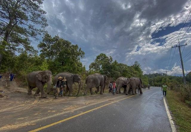 Hàng trăm con voi đi bộ về quê vì thất nghiệp - 4