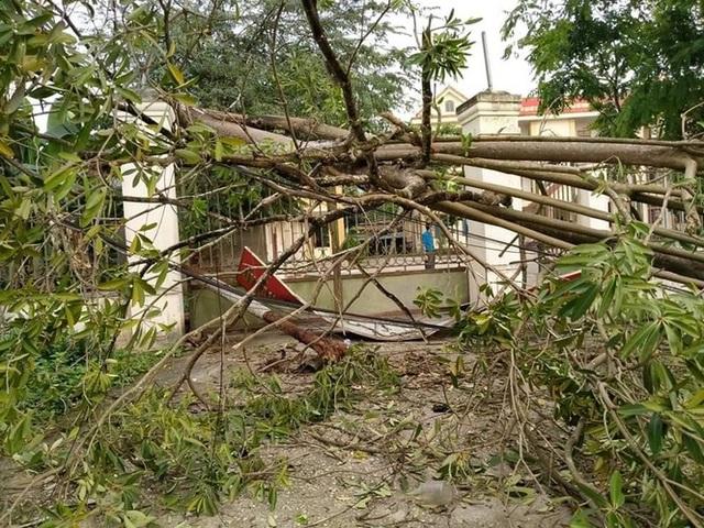 9 xã vùng biên thiệt nặng nề do lốc xoáy và mưa đá - 5