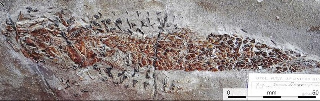 Vụ tấn công thất bại của một con mực cổ đại - 1