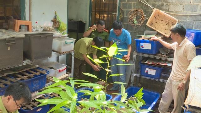Tạm giữ 127 cá thể rùa của một hộ gia đình nuôi nhốt - 2