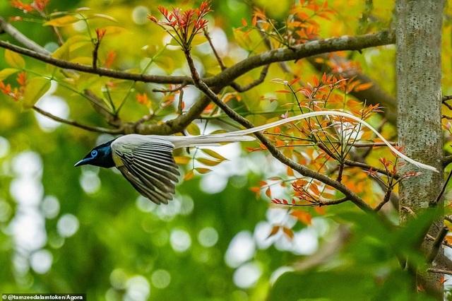 Ảnh Suối Yến của Việt Nam đạt giải nhất cuộc thi Nhiếp ảnh mùa xuân 2020 - 15