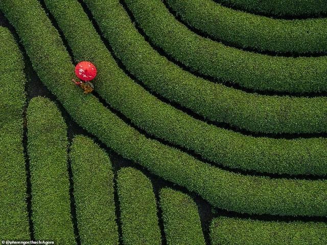 Ảnh Suối Yến của Việt Nam đạt giải nhất cuộc thi Nhiếp ảnh mùa xuân 2020 - 16